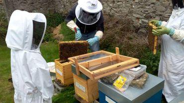 L'idée est d'installer neuf ruches et en faire un projet didactique.
