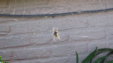Une araignée en automne