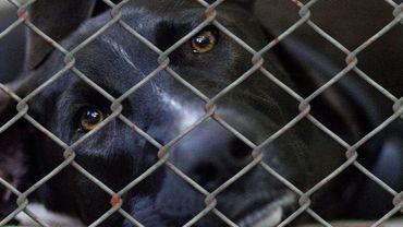 Remicourt: 151 chiens saisis par l'unité du bien-être animal