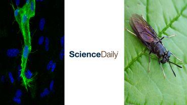 La biologie des tumeurs, Daily Science et la mouche soldat