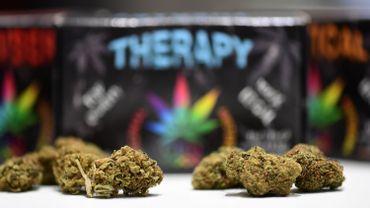 Pourquoi mettre en garde contre l'utilisation du cannabis à usage médical?