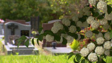 L'arboretum du cimetière parc de Nantes