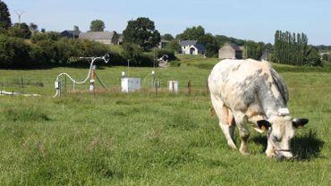 Le GPS attaché au cou de la vache mesure sa position toutes les cinq minutes