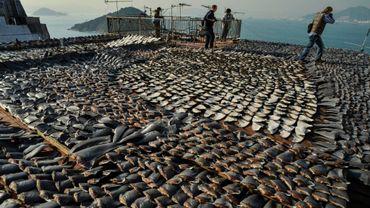 Ailerons de requins en train de sécher sur le toit d'un immeuble de Hong Kong.