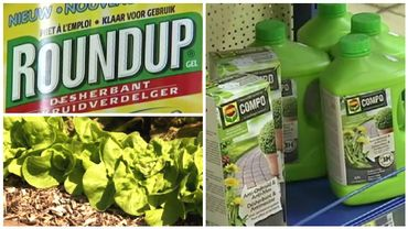 Fin de l'utilisation du glyphosate en Wallonie: quelles alternatives?