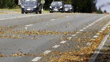 Vous êtes responsables du déblayage des feuilles mortes
