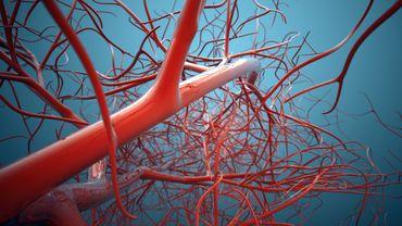 Une équipe française lance une étude pionnière sur des vaisseaux sanguins qui combattent le cancer