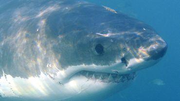 Le Plus Grand Requin Blanc Du Monde Filme Au Mexique