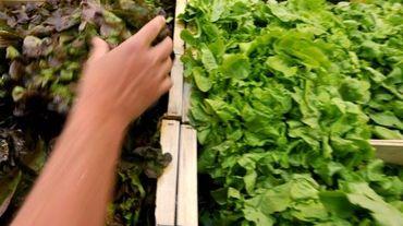 Un choix de salades dans une grande surface