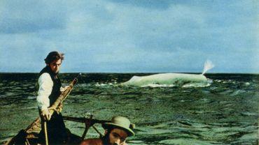 """La véritable histoire derrière la légende de """"Moby Dick"""" !"""