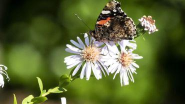 41% des espèces d'insectes sont menacées d'extinction.