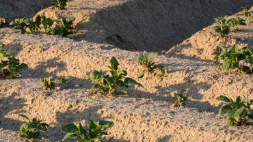 La hausse des températures prévues fin juin risquent d'attaquer encore davantage les sols.