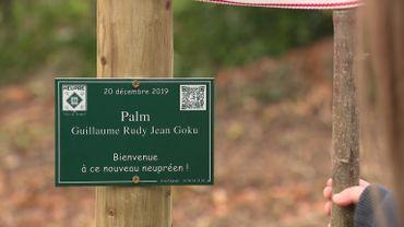La commune Neupré plante un arbre pour chaque nouveau-né