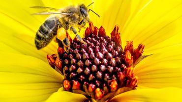 L'état de santé des riverains sera testé en fonction de celui des abeilles.