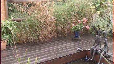 Des graminées autour de la pièce d'eau