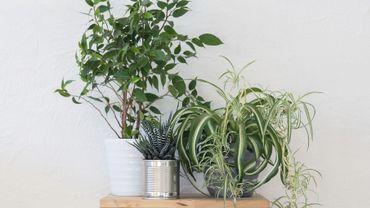 15 plantes d polluantes faciles entretenir. Black Bedroom Furniture Sets. Home Design Ideas