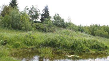 Derrière les installations de la SPA à Charleroi, un espace de biodiversité