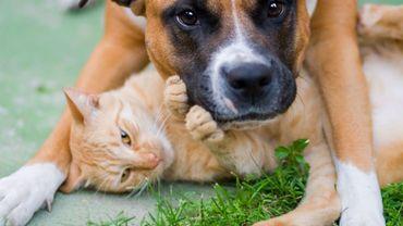 Nos animaux peuvent-ils nous transmettre ou attraper le coronavirus?