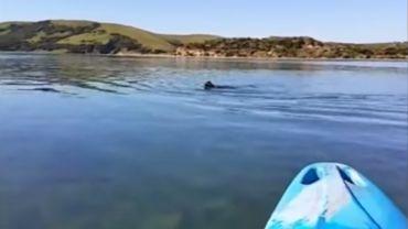 Nouvelle-Zélande: dans les déjections d'un léopard de mer, une clef USB livre ses secrets