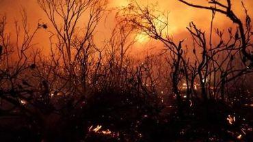 Des centaines de personnes évacuées pour échapper aux feux de forêts en Australie