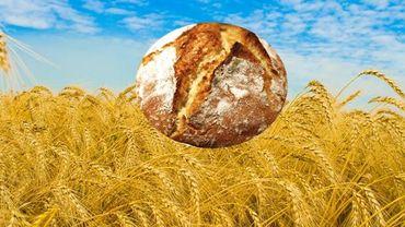 Du blé à la farine dans un premier temps, puis de la farine au pain dans le futur