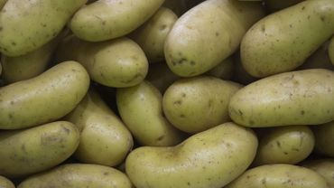 Des pommes de terre cultivées sur Mars, bientôt une réalité?