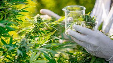 Cannabis médical en Thaïlande: essais sur des patients en cancérologie