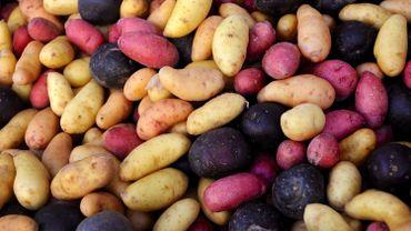Portée par les variétés, la patate a retrouvé la frite