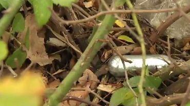 Les gardiens de la paix bruxellois retrouvent de plus en plus de capsulesabandonnées sur la voie publique.