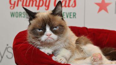 L'internet est en deuil, le célèbre Grumpy Cat est mort