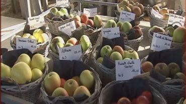 les différentes variétés de pommes de nos régions