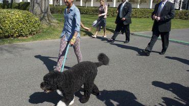 Bo, le chien de la famille Obama a participé à la chasse aux œufs dans les jardins de la Maison Blanche… Une très mauvaise idée.