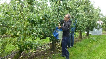 Les saveurs de chez Nous - Pommes et poires de Verlaine