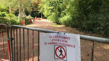 Nivelles:une trentaine de peupliers du Parc de La Dodaine condamnés à cause d'un champignon parasite