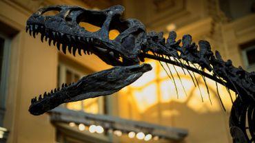 Un squelette presque complet de dinosaure adjugé à plus d'un million d'euros en France