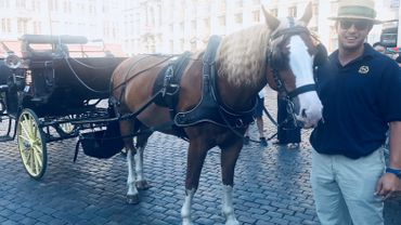 Thibault Danthine, chef des cochers bruxellois et son cheval Haky.