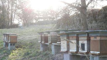 Un apiculteur liégeois remporte le coq wallon pour son miel de printemps