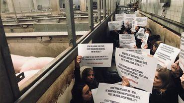 70 d'activistes antispécistes ont pénétré sur le site de l'abattoir porcin de Tielt