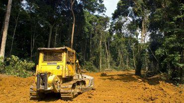 Déforestation au Gabon, en juillet 2006