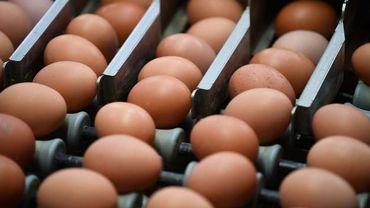 La société Baltus a-t-elle livré des œufs contaminés au fipronil ?
