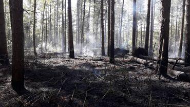 Incendie dans la forêt de Soignes: ne jetez pas vos mégots et ne faites pas de BBQ