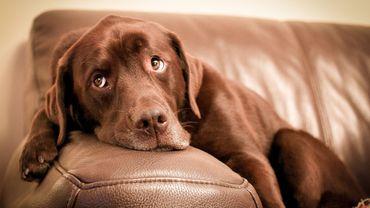 Votre chien pourrait être plus vieux que vous le pensiez (étude).