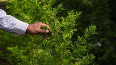 Le cannabis thérapeutique obtient le droit d'être coté à la Bourse de Londres
