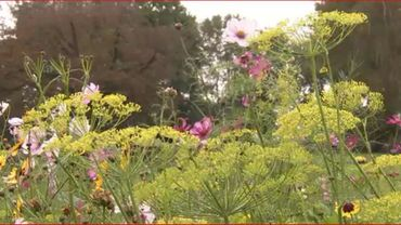 Jardin à la Foire de Beervelde