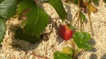Jardin des petits fruits
