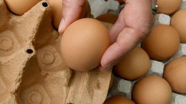 Oeufs contaminés au Fipronil en Allemagne: Ecolo demande la clarté quant aux exportations vers la Belgique