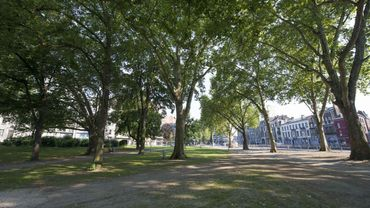 Un projet qui vise à déterminer tous les endroits dans Bruxelles où l'on peut planter des arbres et où ceux-ci peuvent se développer.