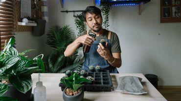 Sur les réseaux sociaux, les plantfluenceurs sont les nouveaux influenceurs à la mode.