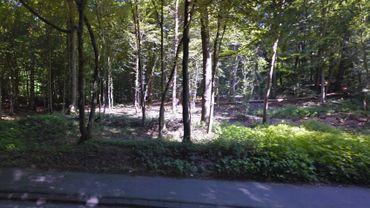La Forêt de Soignes a trop souffert des tempêtes, il faut abattre et replanter