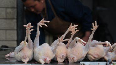 L'Europe importe 15 000 tonnes de volaille chinoise
